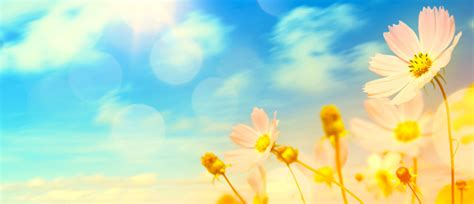 abstract floral background hd picture