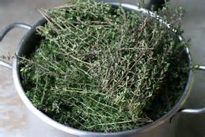 Dried thyme yield for spring 2011 stitch and boots