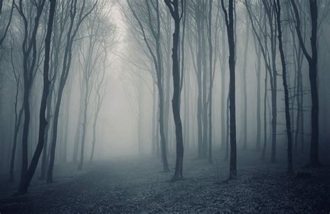 Grey Mist Forest Wallpaper Wall Mural   MuralsWallpaper.co.uk