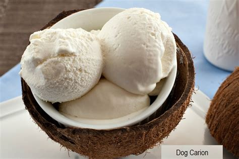 can dogs eat coconut can dogs eat why is bad for dogs carion
