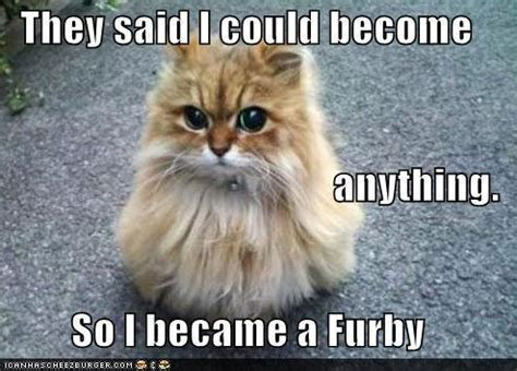 I Became A Cloud Meme - image funny pictures animal meme they told me i could
