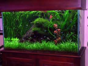 design ideas fish tank decorations for kitchen with le top des aquariums en appartement mais pas que le