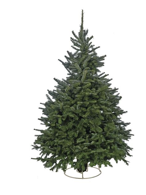 christmas tree needle retention best 28 tree needle retention cox farms tree varieties how to buy the best