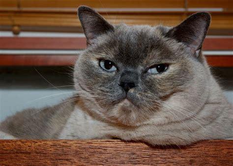 Universal Kitten universal radio customer cats kb3i pa1lou