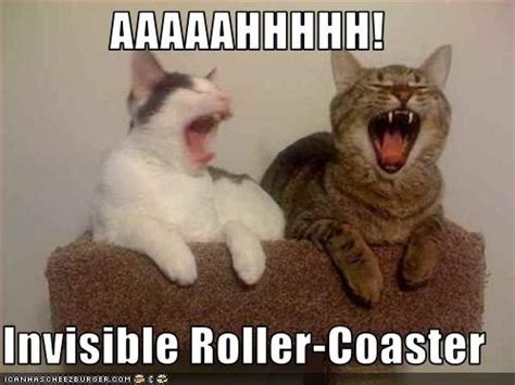 Invisible Cat Memes - aaaaahhhhh invisible roller coaster invisible cat