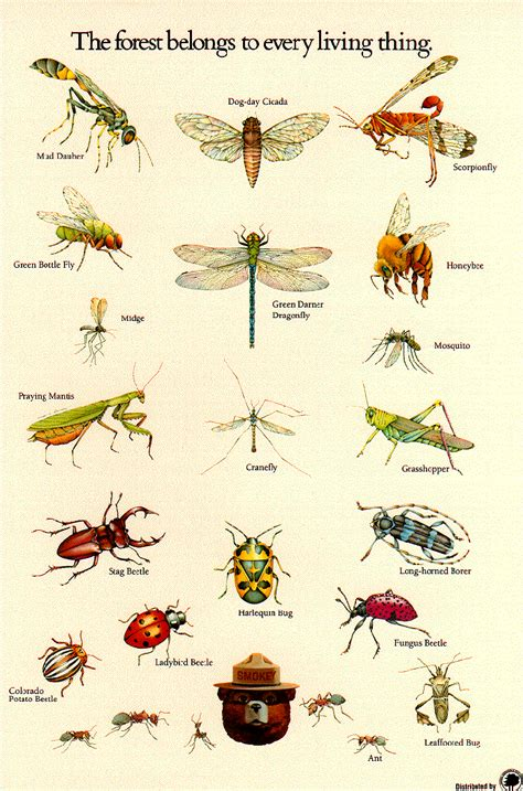 Printable Insect Poster | insect identification poster from the u s forestry