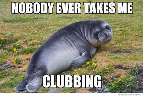 Sad Animal Memes - cute seal memes 12 pics