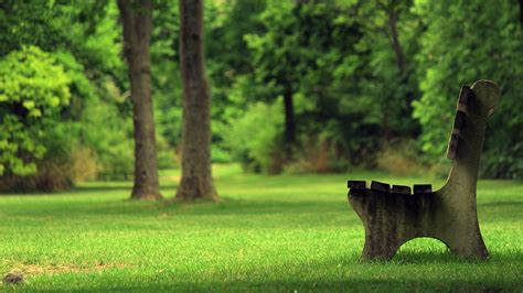 green trees grass summer outdoors bench relaxing