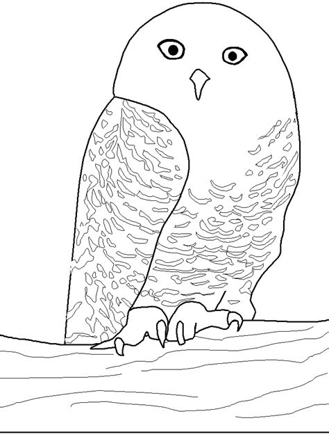 coloring page snowy owl owls animal coloring pages pictures