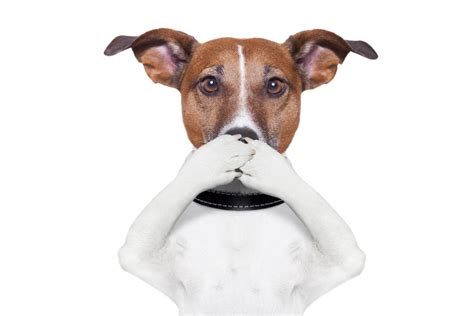 breathing puppy halitosis bad breath in dogs causes and prevention