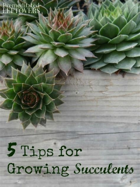 success with succulents choosing growing and caring for cactuses and other succulents books 28 best helpful tips for growing succulents tips for