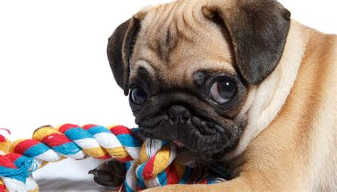 dogs with anxiety how i help my deal with separation anxiety top tips