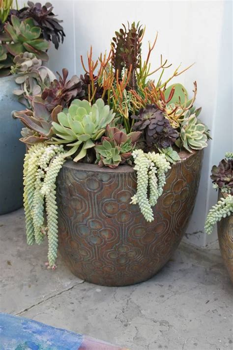 large succulent planter large succulent arrangement by simply succulent https