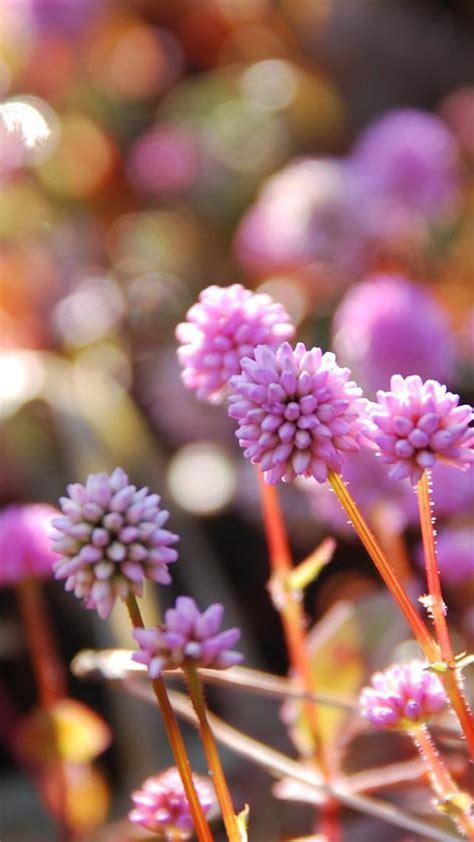 sfondi fiore sfondi iphone fiori 81 immagini