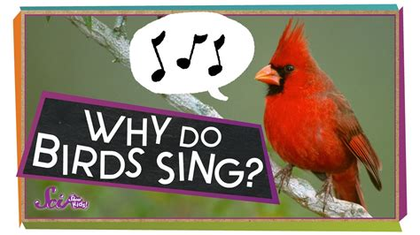 why do birds sing lets go kids adventures