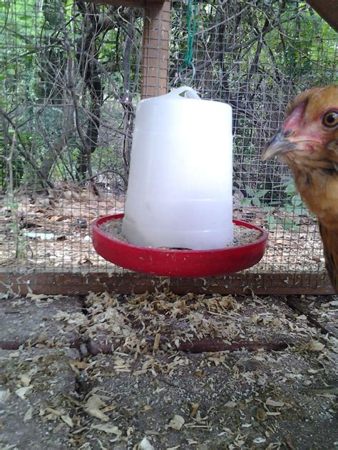 backyard poultry raising easy and cheap tips and tricks for raising backyard