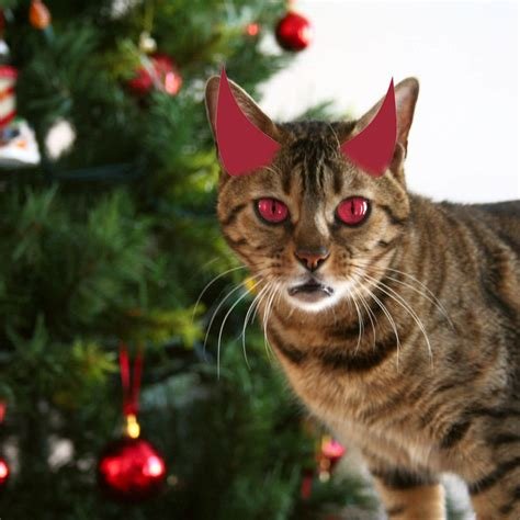 cats attack christmas trees popsugar pets