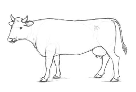 how to a cow pictures cattle drawing drawing gallery