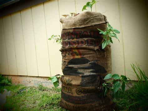 How To Make A Sack Garden Engineering For Change Bag Gardening Vegetables