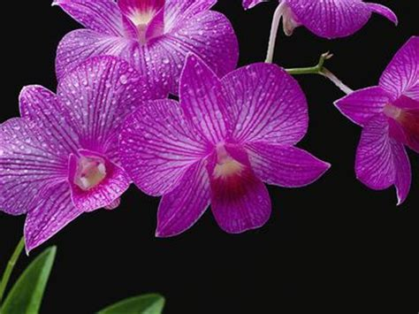 prince avnon and the with orchid books orchids vanda on orchids orchid pot and