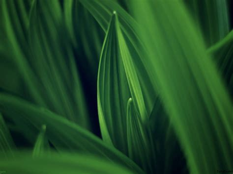 Leaves of Green   HD Wallpapers