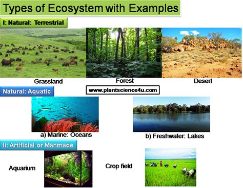 exle of ecosystem ecosystem definition different types and exles plant
