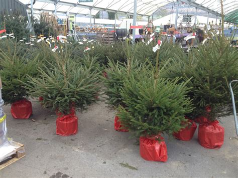 stores selling real christmas trees real trees