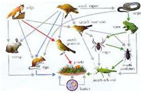 catena alimentare dello stagno il mago di oz catene e reti alimentari