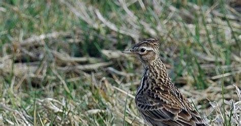 Harga Pakan Burung Branjangan tips tips perawatan harian burung branjangan