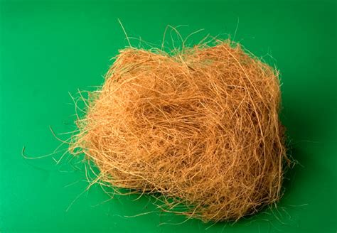 coco coir top benefits and uses of coconut coir