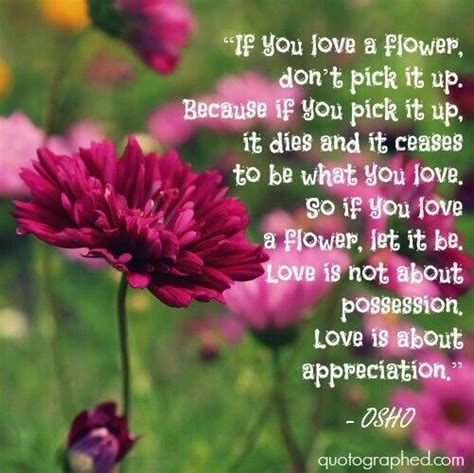 love  flower don  pick      ceases