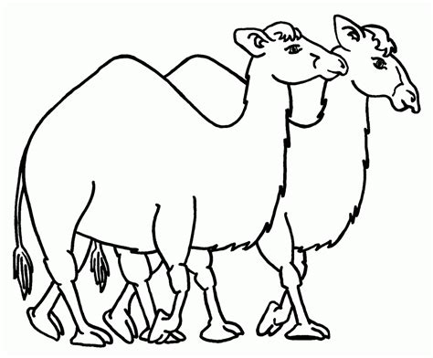 Free Printable Camel Coloring Pages For Kids Camel Colouring Page