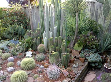 best 25 outdoor cactus garden ideas on