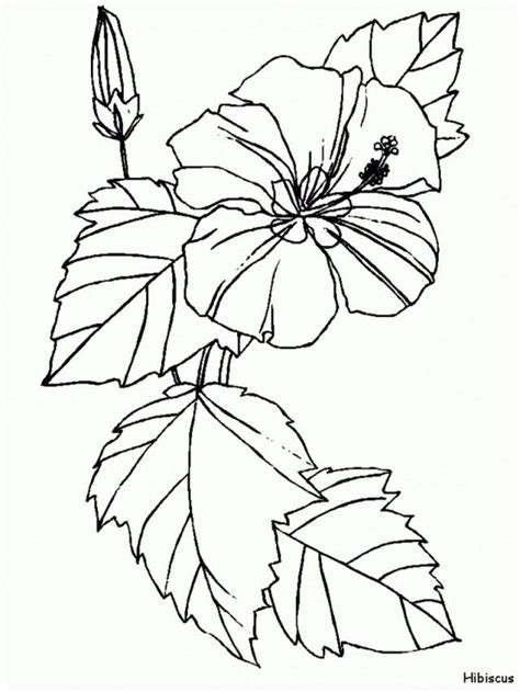 hawaiian flowers coloring pages printable 183139 hawaiian