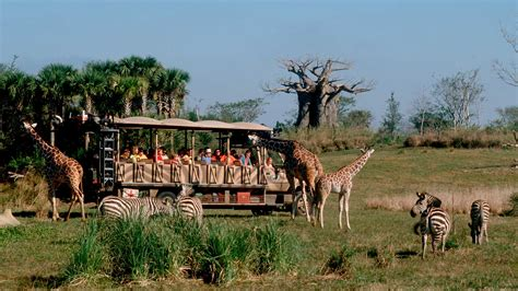 imagenes disney animal kingdom animal kingdom tickets orlando destination guide