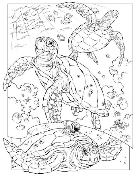 hard turtle coloring pages sea turtle sea turtle documentary coloring page
