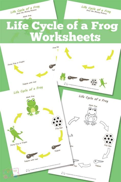 Cycle Of A Frog Worksheet by 1000 Ideas About Frog Cycles On