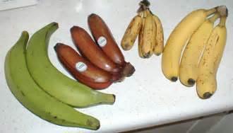 list of banana cultivars wikipedia