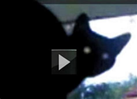 cat barking like a cat top10 viral collection