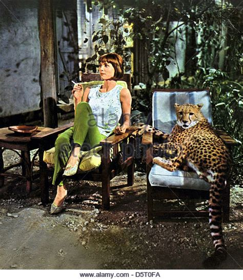 elsa martinelli hatari dallesandro stock photos dallesandro stock images alamy