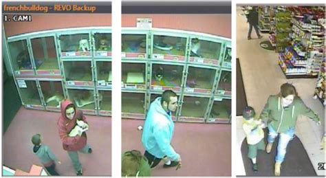 greenwood police 3 suspects stole bulldog from pet store
