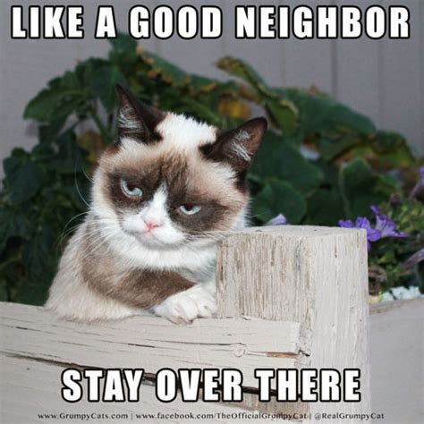Good Cat Meme - grumpy cat memes good image memes at relatably com