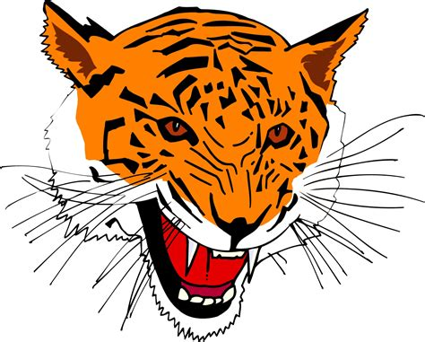 wallpaper cartoon tiger cartoon tiger clipart best