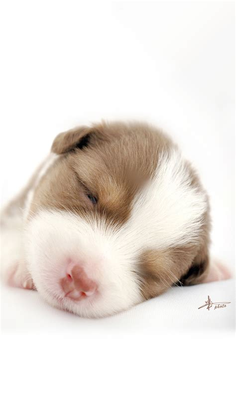 puppy sleeping with baby sleeping baby wallpaper free iphone wallpapers