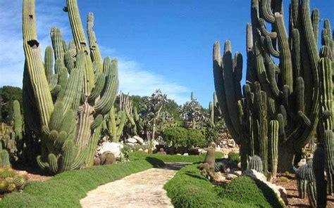 jardines en zonas aridas o des 233 rticas - Decorar Jardin Con Plantas Deserticas