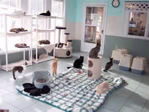 cat room u al h p k pet owner rp literate and