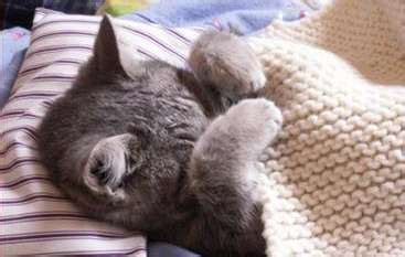 Harga Kandang Kucing 40x60 maniakucing pecinta kucing
