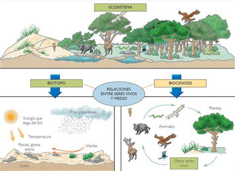 leer ahora que son los biomas la ciencia de los seres vivos en linea blog del centro escolar quot clarisa c 225 rdenas quot los ecosistemas