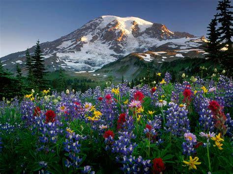 imagenes flores impresionantes pic new posts wallpaper fc nantes