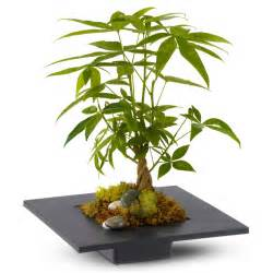 Sending Wine As A Gift Money Tree May Bring Good Luck Good Fortune And Prosperity The Green Head